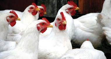 Nyonende Poultry Cooperative T/a Nyonende Investments (PTY) LTD (R9.6 Million)