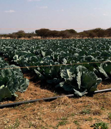 Mohale Agricultural Cooperative (R13.7 Million)