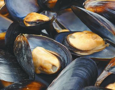 R9.9 Million For A Mussel Farm In Saldanha Bay, Western Cape