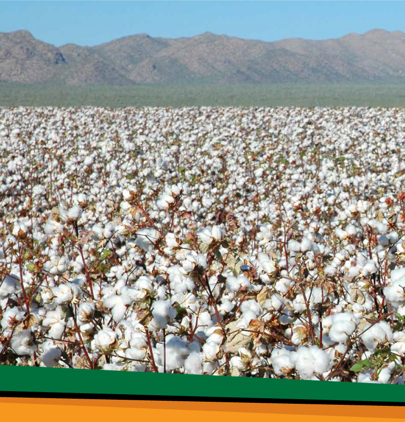 Project 12: Nkomazi Cotton Development Project